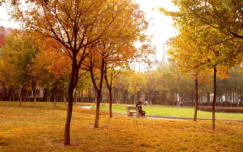 科技大学2017年秋天最新的校园风景拍摄图